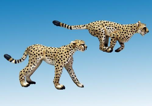 North Star Africa: Cheetahs (2)