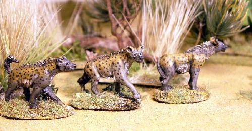 North Star Africa: Spotted Hyena (3)