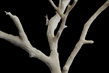 Tabletop World: Dead Tree - Tabletop World: Dead Tree