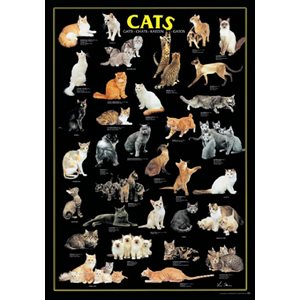 Puzzle (1000 Piece): Cats (Damaged)