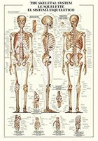 Puzzle (1000 Piece): The Skeletal System (Damaged)